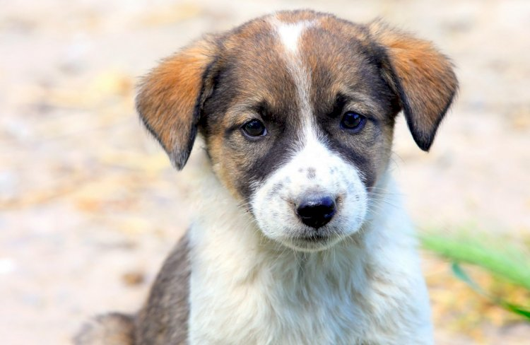 Adopția unui câine comunitar salvează o viață