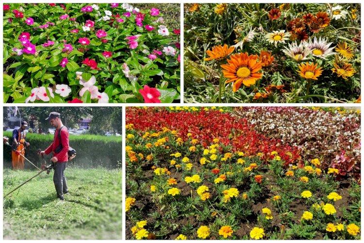 Constanța plantează flori!