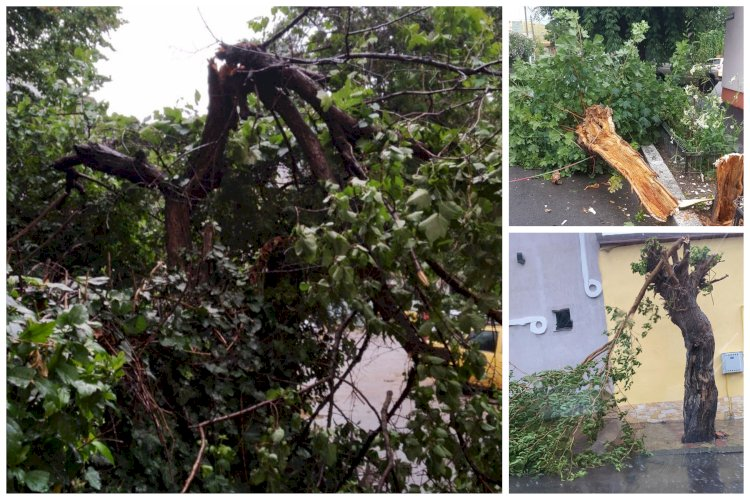 Copaci puși la pământ de vânt la Constanța