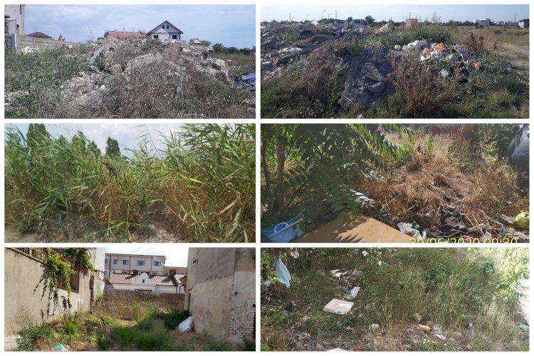 Primăria Constanța aplică amenzi proprietarilor care nu își îngrijesc terenurile