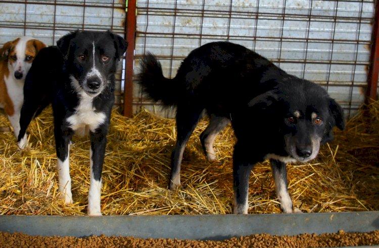 Program cu publicul la Adăpostul de animale